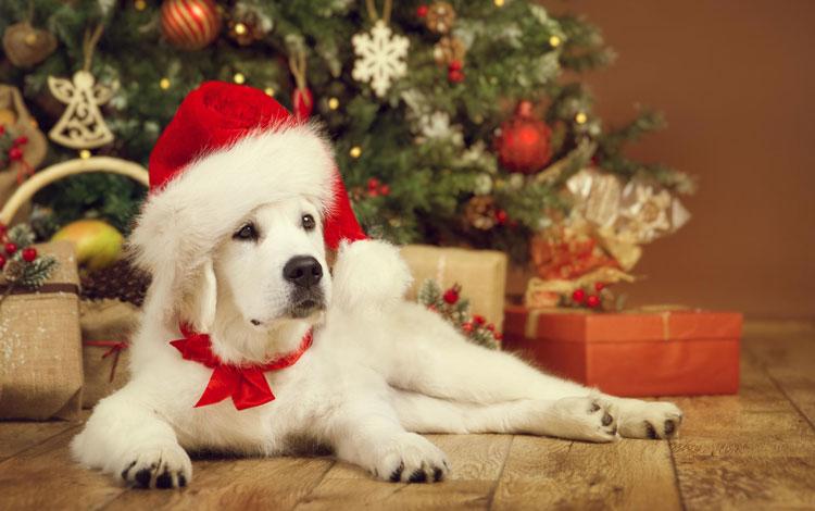 Kerstactie dierenwinkel Pets Place Muiden
