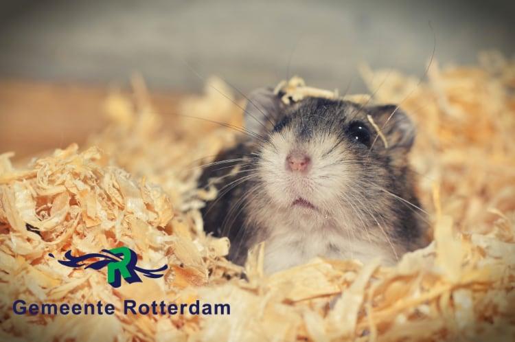 Dierbaar voor dierenspeciaalzaken gemeente Rotterdam