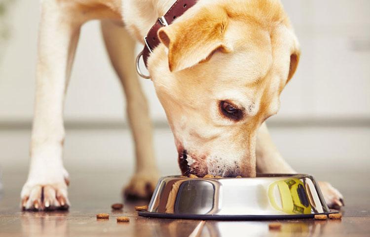 Hond eet voer