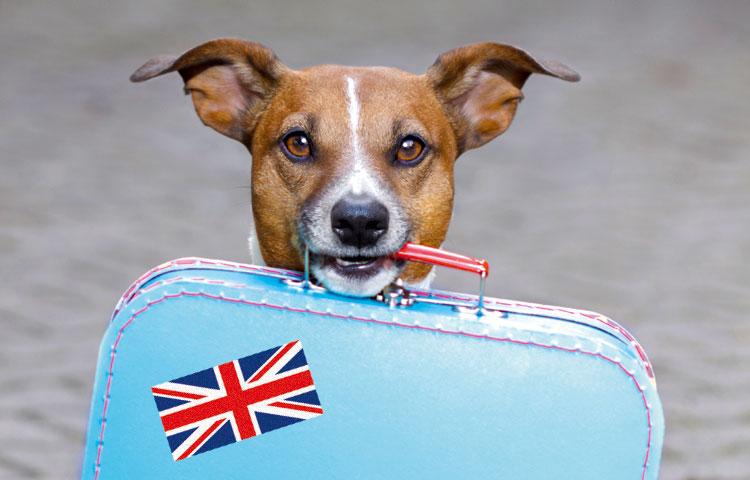 Hond met Engels koffertje