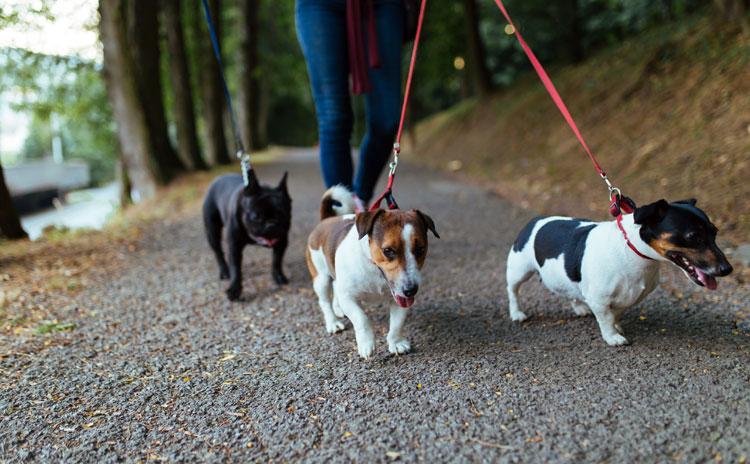 Normering hondenuitlaatservicebedrijven