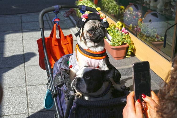 Honden in kinderwagen