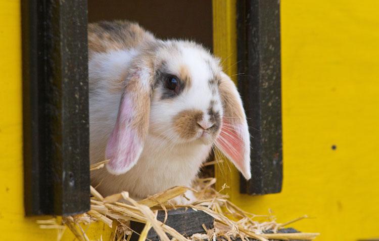 Maattabel voor konijnenhokken