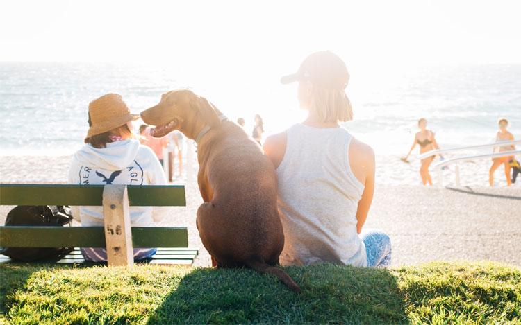 Zomer aan zee met de hond