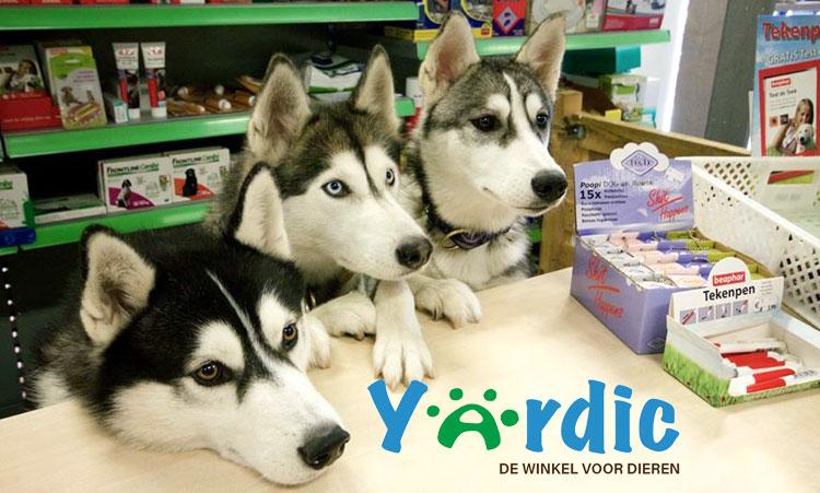Yardic husky's