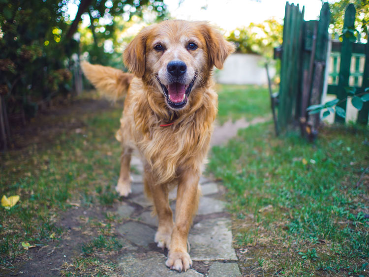 Hond in pension