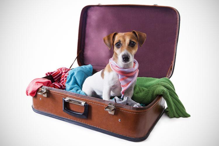 Hond op reis nemen naar Engeland
