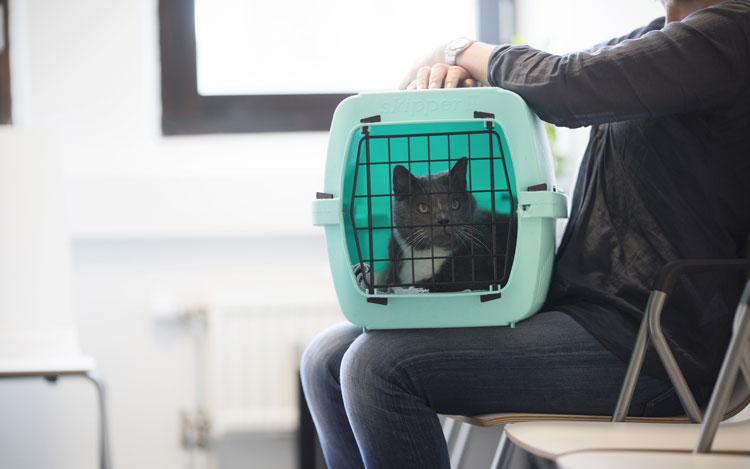 Kat naar dierenarts