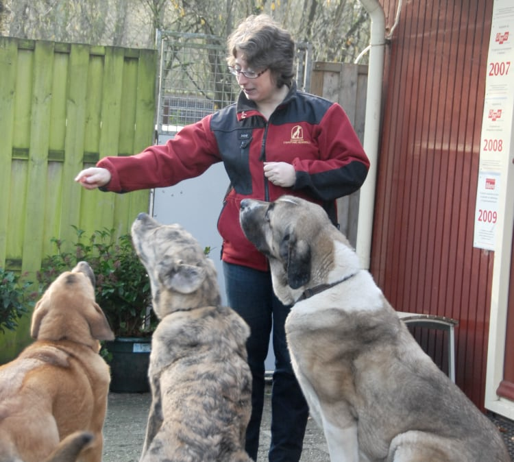 Camping Kennels stopt