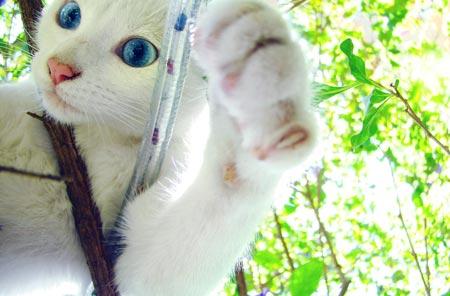 Kattenmodel